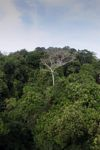 Panama rainforest canopy