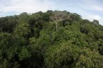 Panama rainforest canopy at eye-level