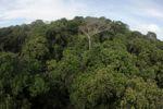 Panama rainforest canopy at eye-level