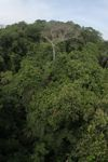 Panama jungle canopy at eye-level