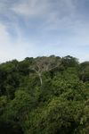 Panama rain forest canopy at eye-level