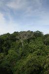 Panama rain forest canopy at eye-level