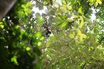 Baby spider monkey [panama_0295]