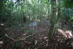 Litter traps in the rainforest