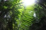 Rainforest palm fronds