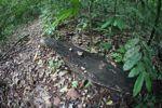 Fungi in the rain forest
