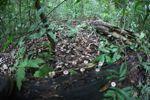 Fungi in the rainforest