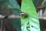 Butterfly [panama_0375]