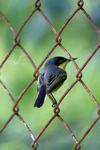 Bird [panama_0394]