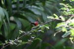 Bird [panama_0406]