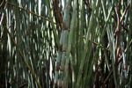 Bamboo grove [panama_0420]