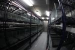 The newest facility for endangered frogs at Summit