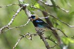 Bird [panama_0493]