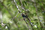 Bird [panama_0494]