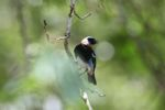 Bird [panama_0495]