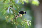 Bird [panama_0497]