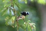 Bird [panama_0499]