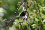 Bird [panama_0501]