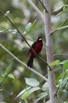 bird [panama_0525]