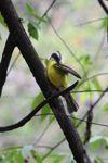 bird [panama_0527]
