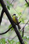 bird [panama_0528]