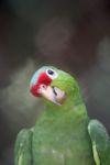 Parrot [panama_0560]
