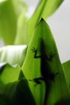 Lizard shadow on a leaf
