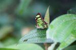 Butterfly [panama_0638]