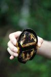 Tortoise [panama_0640]