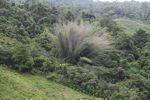 Bamboo grove [panama_0688]