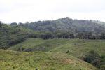 Teak plantation adjacent to natural forest
