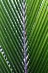 Palm frond lit in the sunlight