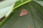 Moth [panama_0724]