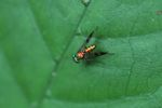 Multicolored fly
