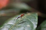 Wasp [panama_0855]