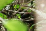 Bird [panama_0857]