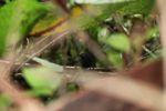 Bird [panama_0858]