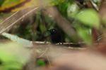 Bird [panama_0859]