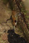 Frog [panama_0958]