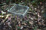 Leaf fall trap