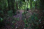 Lavendar flowers from a Jacaranda tree blanketing the floor of the rainforest