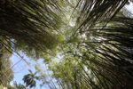 Bamboo grove [panama_1207]