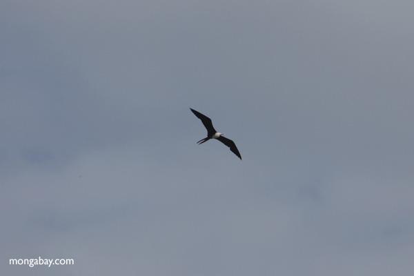 Bird [panama_0055]