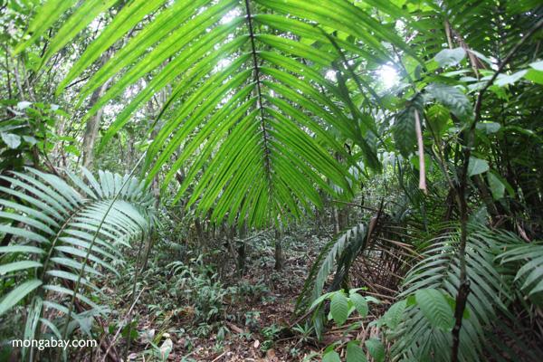 Palm frond [panama_0221]