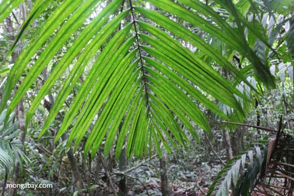 Palm frond [panama_0222]