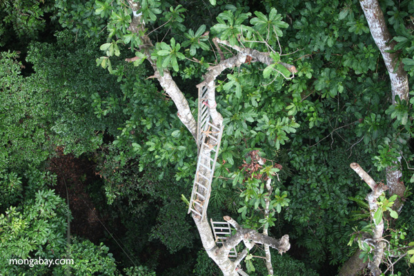 Series of ladders used to climb into the rainforest canopy