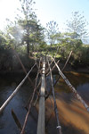Wooden bridge in Papua [papua_0053]