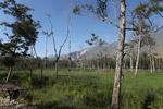 Fields in New Guinea
