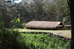Grass hut in New Guinea
