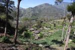 Dani village in New Guinea [papua_0133]